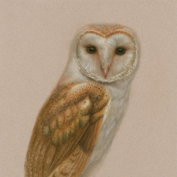 Barn Owl, original pastel framed.