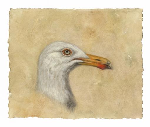 2015 Sea Gull