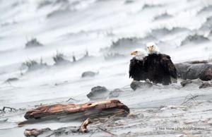 Sand Storm Survivors