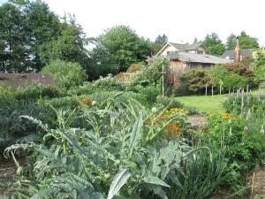 Christine Trexel's garden