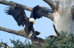 """Title """"Fish to become Eagle"""""""
