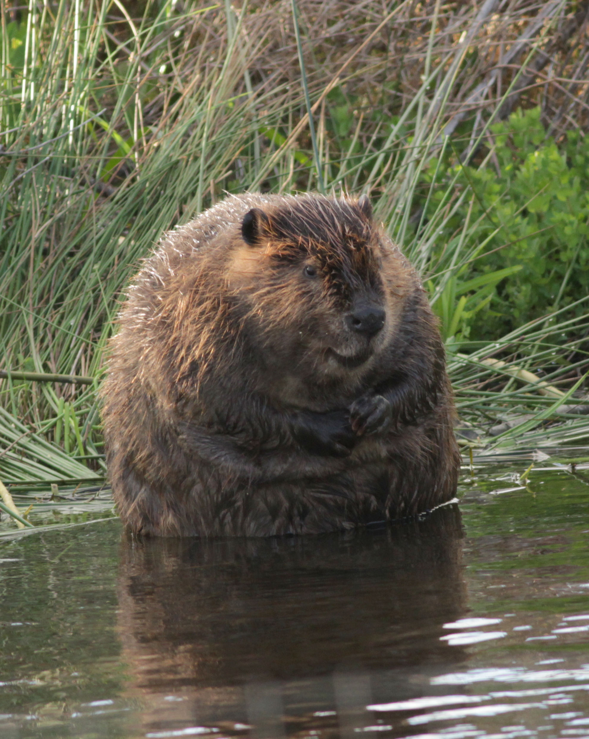Beaver Tales art Exhibit – Worth A Dam