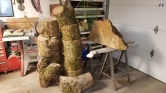 1 – Freshly Harvested Myrtlewood – Ready for Turning (the Burl is the piece of wood on the far right resting on the sawhorses)