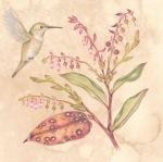 Salal Hummingbird copy